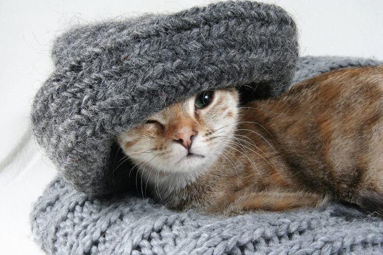 что носить под свитер